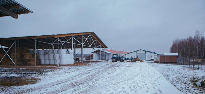 На молочной ферме в Прокудино будут производить сыр