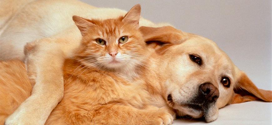 Ребятам – о зверятах… Что даст людям и четвероногим Федеральный закон «Об ответственном обращении с животными»
